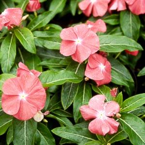 Τα φυτά ανθίζουν πολύ νωρίτερα με την άνοδο της θερμοκρασίας