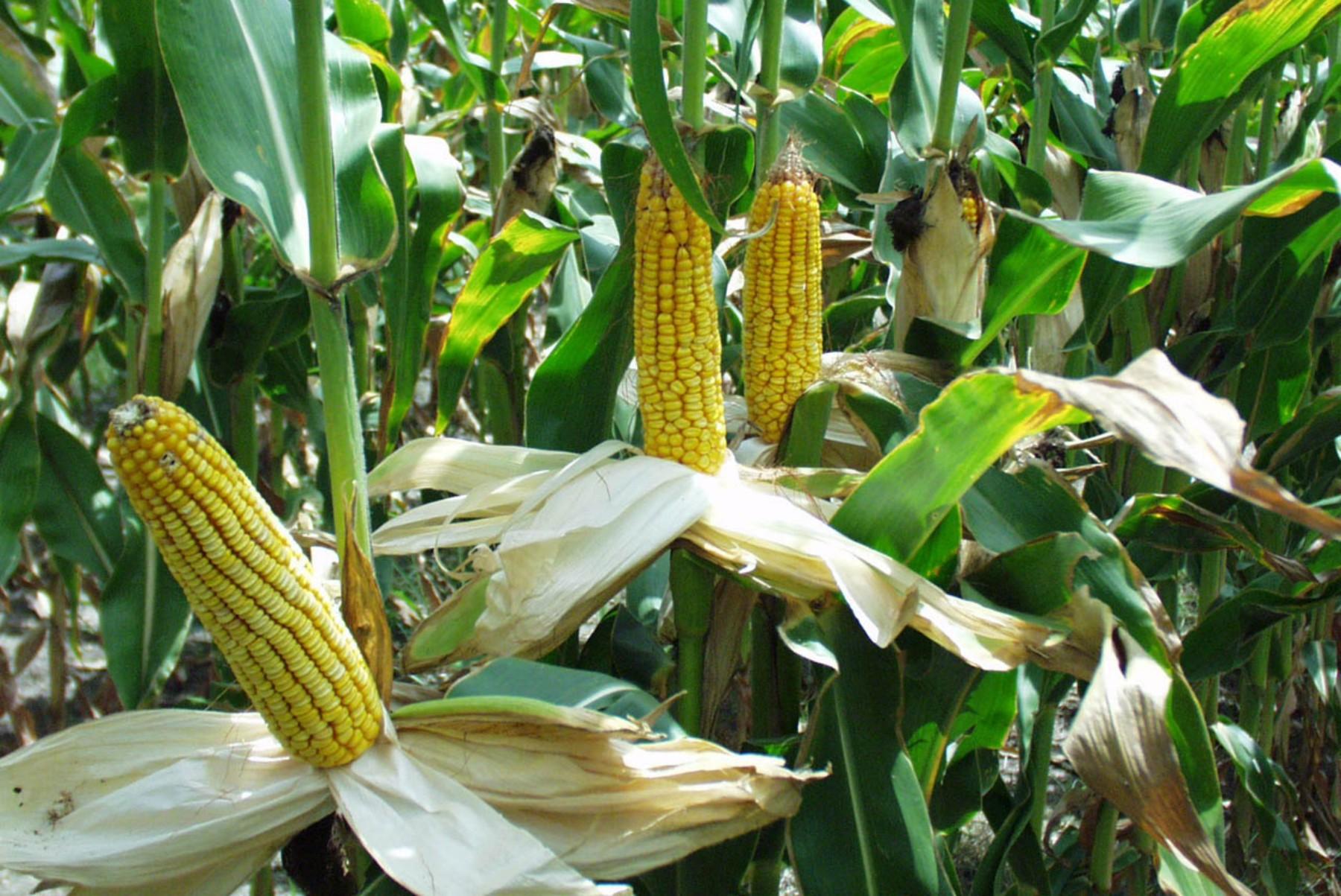 20% Μείωση στις ποτιστικές καλλιέργειες