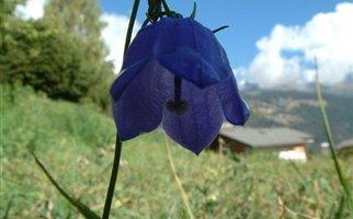 Φυτά με ικανότητα μνήμης για επιβίωση