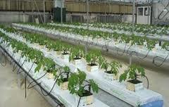 Ενημέρωση για  Καλλιέργειες στο Θερμοκήπιο