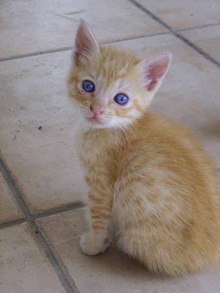 Εγκλώβισε γατάκι μέσα σε ντουλαπάκι βέσπας