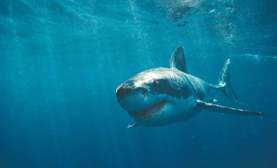 Ο πρώτος φυτοφάγος καρχαρίας στον κόσμο