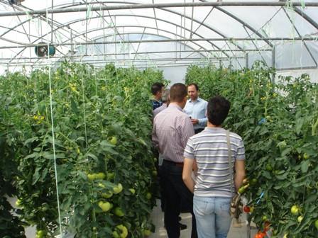 Υδροπονικές καλλιέργειες στο θερμοκήπιο