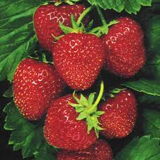 Μούρα και φράουλες εναντίον Πάρκινσον