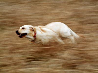 Σκυλιά κυνήγησαν τεχνικό της ΔΕΗ που έκοβε το ρεύμα