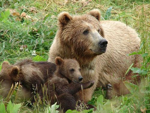 Εκπαιδευόμενα αρκουδάκια ρήμαξαν κοτέτσι στα Τρίκαλα