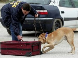 Διακοπές με ναρκωτικά στις βαλίτσες τους