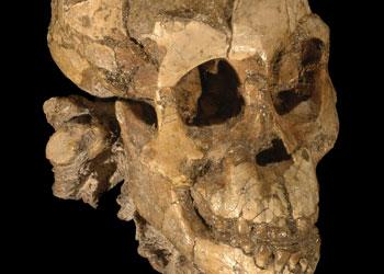 Η Ασία κι όχι η Αφρική, τόπος καταγωγής των απώτερων προγόνων του ανθρώπου