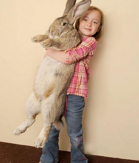 Τα πιο χοντρά ζώα στον κόσμο