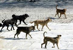Αδέσποτα σκυλιά κατασπάραξαν σε δημόσιο κήπο έναν υπερήλικα