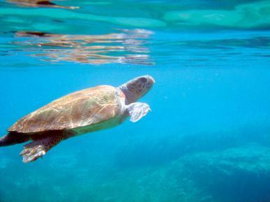 Αποκεφάλισαν θαλάσσιες χελώνες