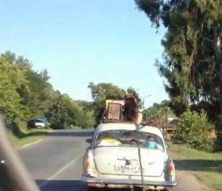 Ένα σκυλί στην οροφή ενός αυτοκινήτου  [Video]