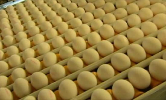 Διοξίνη σε αβγά στη Γερμανία