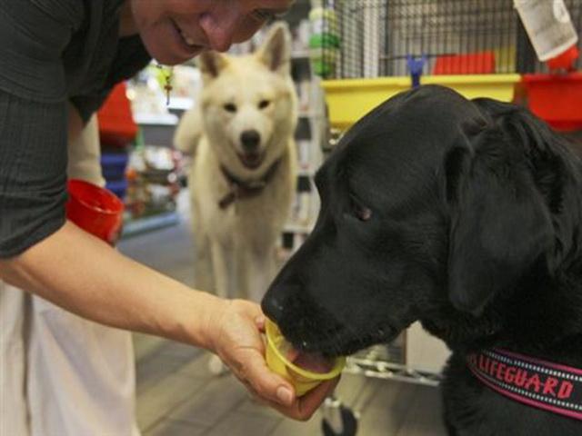 Gelato παγωτό για σκύλους