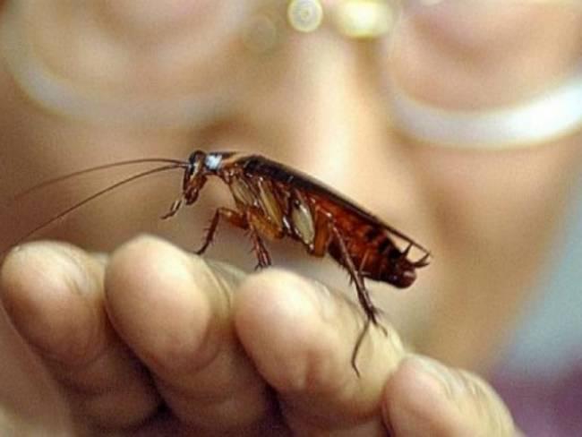 Μύθος ή αλήθεια: Κατσαρίδες - Θα επιβιώσουν μιας πυρηνικής καταστροφής
