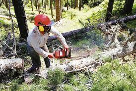 Επίσπευση της διαχειριστικής μελέτης  για την υλοτόμηση του δάσους Κερασιάς