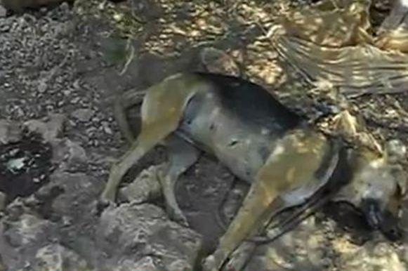 Διεθνείς αντιδράσεις για τη δηλητηρίαση αδέσποτων σκυλιών στα Χανιά