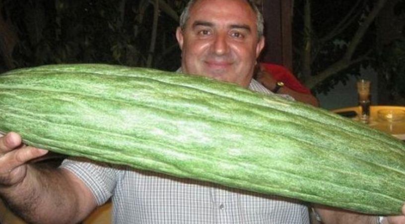 Αγγούρι βάρους 6 κιλών στην Κρήτη!