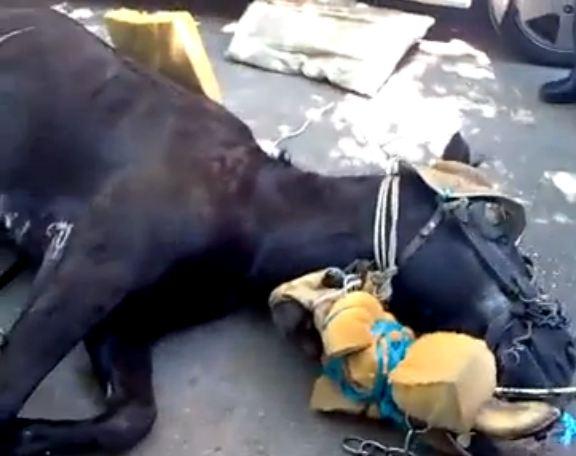 Τρία χρόνια φυλακή και 5.000 ευρώ, για κακοποίηση ηλικιωμένου αλόγου