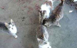 Δηλητηρίασαν δεκάδες γατιά στη Ρόδο