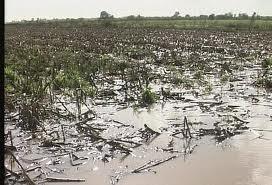 Καρδίτσα: Ζημιές από τη χθεσινή καταιγίδα