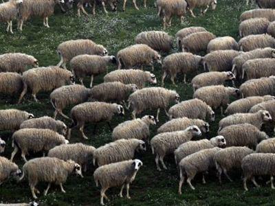 Κεραυνός σκότωσε τετρακόσια πρόβατα στο Δίστρατο Κόνιτσας