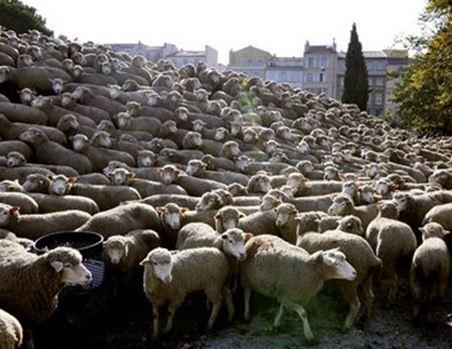 Τρίκαλα: Λύκοι κατασπάραξαν πρόβατα στη Φαρκαδόνα