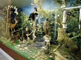 Διάλεξη από το Μουσείο  Φυσικής Ιστορίας Βόλου