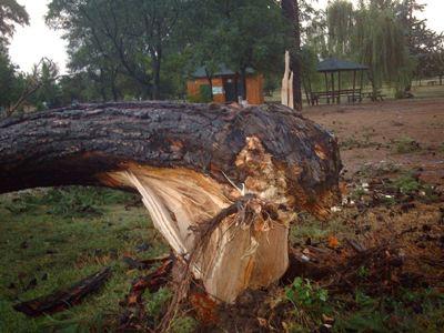 Ξεριζώθηκε από τον αέρα υπεραιωνόβιο δέντρο στα Τρίκαλα