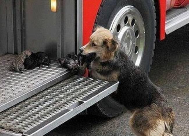 Σκυλίτσα σώζει τα μικρά της από τις φλόγες