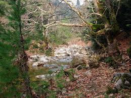 Εκπόνηση διαχειριστικής  μελέτης για το δάσος Κερασιάς