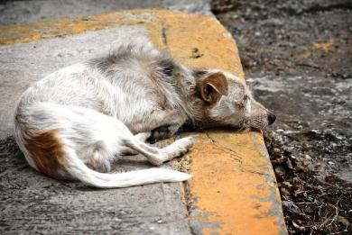 Λαθρομετανάστες έτρωγαν αδέσποτα σκυλιά στη Νέα Κιο
