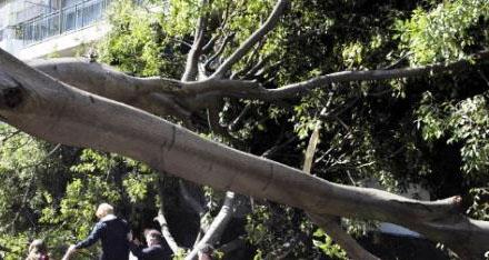 Δέντρο προσγειώθηκε σε καντίνα