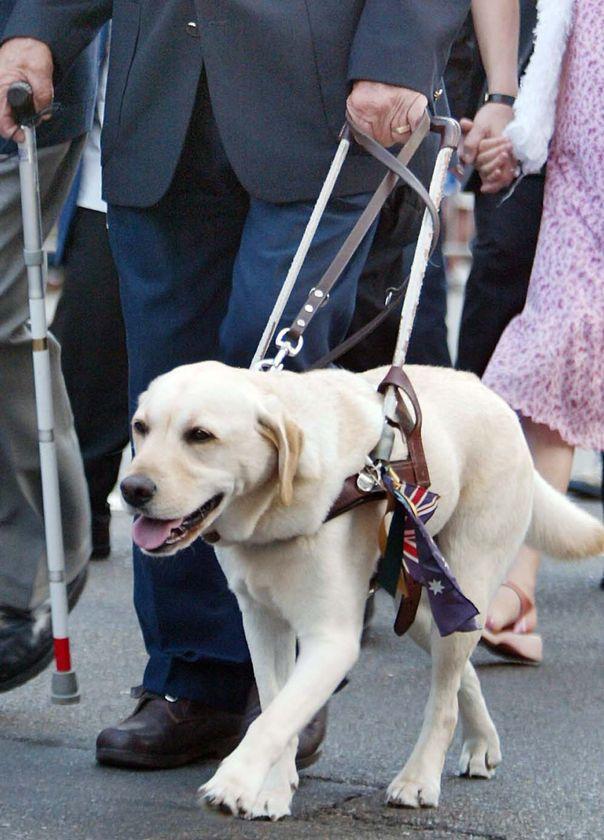 Επιβίβαση σκύλων  οδηγών  τυφλών