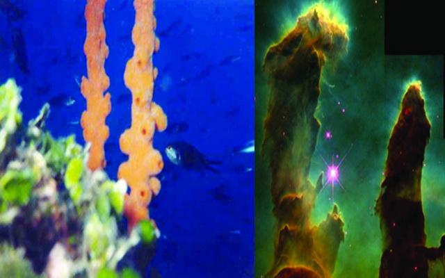 Υποβρύχια εικόνα που θυμίζει το μακρινό διάστημα