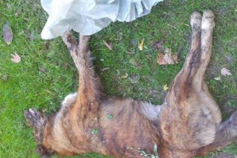 Δηλητηρίασαν σκυλιά στην Καρδίτσα