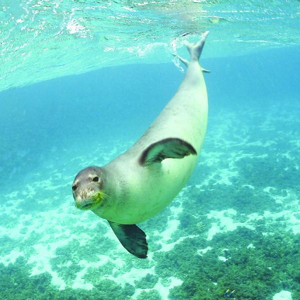 Διάσωση μικρής μεσογειακής φώκιας