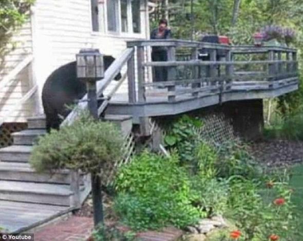 Βρήκε αρκούδα στην αυλή της!