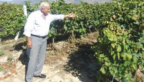 Λάρισα: Συνεχείς οι κλοπές αγροτικών προϊόντων και εξοπλισμού