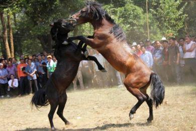Βαρβαρες αλογομαχίες στην Κίνα – Αντιδράσεις για τις εικόνες ντροπής
