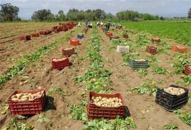 ΣΔΟΕ: Παραβάσεις σε επιχειρήσεις εμπορίας οπωροκηπευτικών προϊόντων