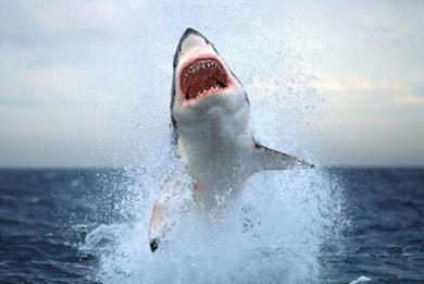 Καρχαρίας κατασπάραξε σέρφερ στην Καλιφόρνια