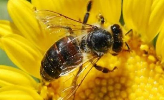 Ο συνδυασμός που σκοτώνει... τις μέλισσες!