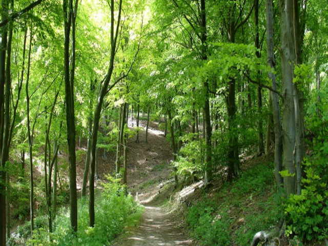 GPS στο δάσος της Σκοπέλου