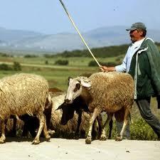 Συνεδρίαση κτηνοτρόφων  στον Αλμυρό