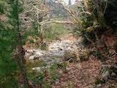 Προς αξιοποίηση  του δάσους της Κερασιάς