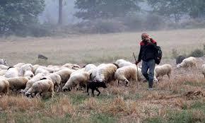 Συγκέντρωση κτηνοτρόφων  την Κυριακή στον Αλμυρό