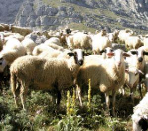 Λάρισα : Κτηνοτρόφοι διαμαρτύρονται για φωτοβολταίκό πάρκο