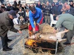 Λάρισα: Αναβίωσε το έθιμο της γουρουνοχαράς
