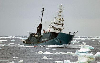 Απέπλευσαν από τα ιαπωνικά λιμάνια τα φαλαινοθηρικά